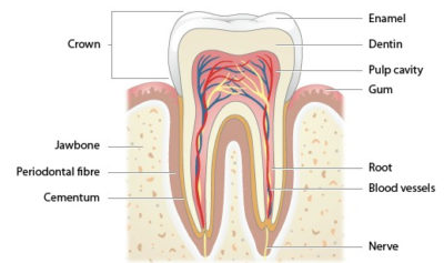 Illustration of Does Cold Air Make Toothache?