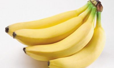 Illustration of Can You Eat Bananas To Speed Up The Recovery Of Typhus?