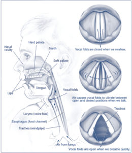 Illustration of Hoarseness But Not Coughing