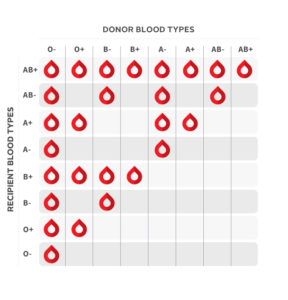 Illustration of Blood Donation From Blood Type A For Blood Type A +?