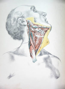 Illustration of The Throat Feels Like There's A Lump In The Sputum?
