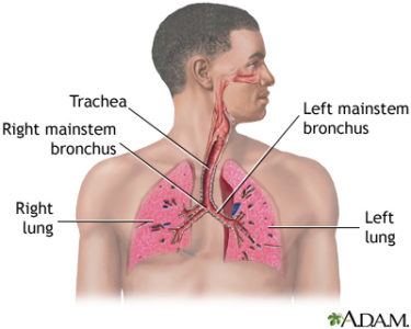 Illustration of Does The Chest And Throat Hurt With Corona Virus?