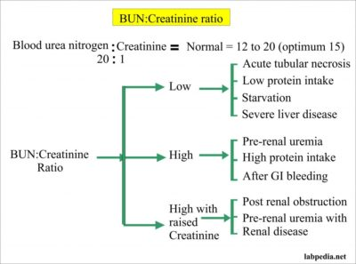 Illustration of Ureum Increases And Creatinine Is Normal?