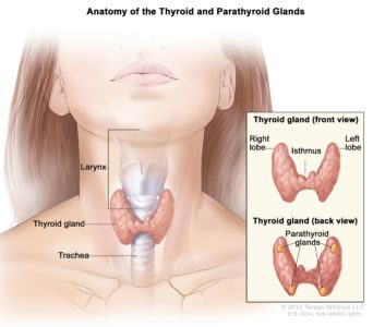Illustration of What Is The Treatment For Malignant Tumor In The Thyroid Gland?