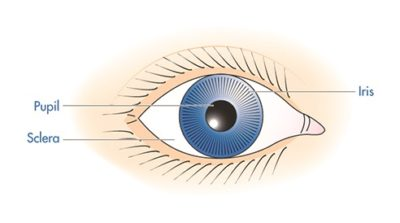 Illustration of The Cause Of The Eye Feels Itchy With The Appearance Of White Membranes In The Eyes?