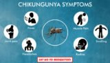 Complications That Can Arise From Chikungunya?
