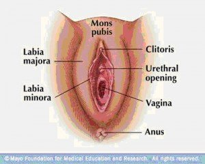 Illustration of Small Hole Above The Vagina?