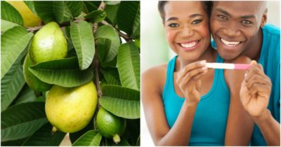 Illustration of Can Guava Leaves Fertilize Hair Loss?