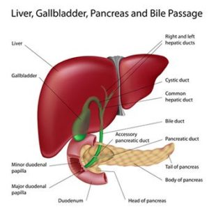 Illustration of Liver Disease