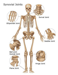 Illustration of The Joints