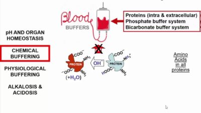 Illustration of About Blood Ph