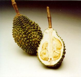 Illustration of Overcoming Durian Seeds That Are Swallowed