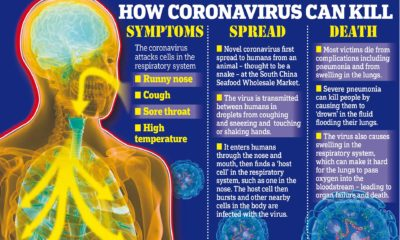 Illustration of How Does The Corona Virus Attack Humans?