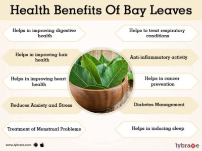 Illustration of The Use Of Bay Leaves For Medicine