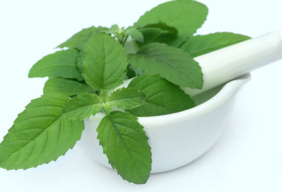 Illustration of Is It Safe To Eat Basil Leaves For Pregnant Women