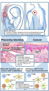 Illustration of Overcoming The Symptoms Of Inflammation Of The Cervix Despite Cauter Measures