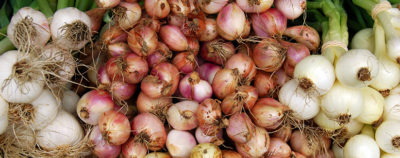 Illustration of Consumption Of Onions For People With Stomach Acid