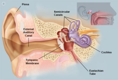Illustration of I Experience Deans And Dizziness, Sometimes Nasal Congestion, Is That A Symptom Of Corona Huh Doc?
