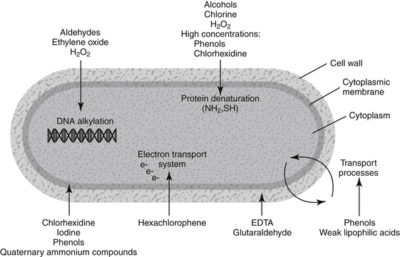 Illustration of What Is The Antiseptic Characteristic?