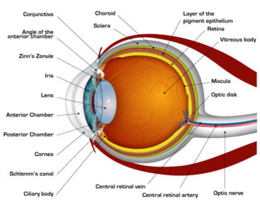 Illustration of How Does The Mechanism Of The Eye And Brain Work When Reading?