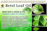 Can Betel Leaf Extract Be Used As A Hand Sanitizer?