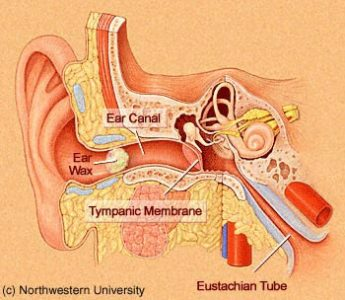 Illustration of Dizziness After Cleaning The Ear Because There Are Foreign Objects?