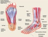 Hip Pain To The Sole Of The Foot In The History Of Pen Placement In Patients With Bone TB?