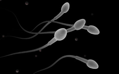 Illustration of Does Sperm Exposed To Soapy Water Die Immediately?