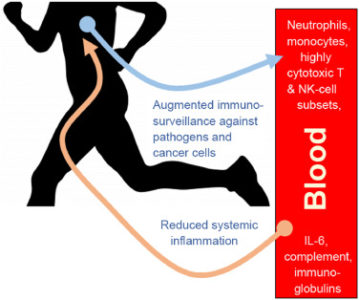 Illustration of The Association Of Increased Body Resistance To The Prevention Of Corona Virus
