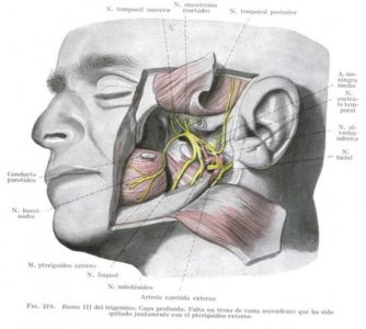 Illustration of The Palate That Feels Itchy, Painful And Radiates To The Ears, Nose, And Throat?