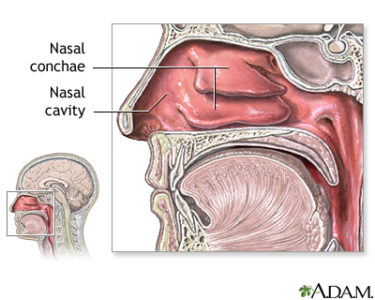 Illustration of Foreign Objects Enter The Nose And Into The Digestive Cavity?