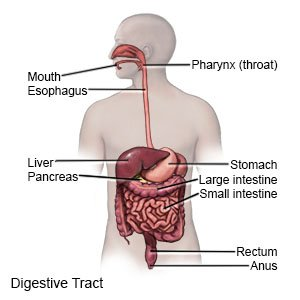 Illustration of The Cause Of Nausea, Vomiting, Bubbling Chapter And Stomach Like Shaken?