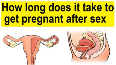 Illustration of Occurrence Of Fertilization After Intercourse?