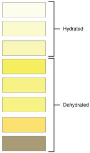 Illustration of Not CHAPTER 4 Days And Dark Yellow Urine When 10 Weeks Pregnant?