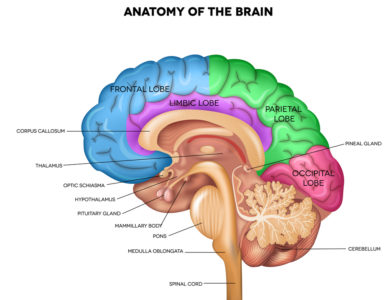 Illustration of The Nervous System Of The Brain That Cannot Respond To Facial Movements?