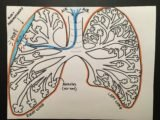 Does The Night Wind Cause Pneumothorax?