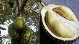 Safe Distance For Seafood Consumption After Eating Durian?