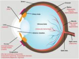 Side Effects Of Nano Ion K Glasses On Cylindrical Eyes?