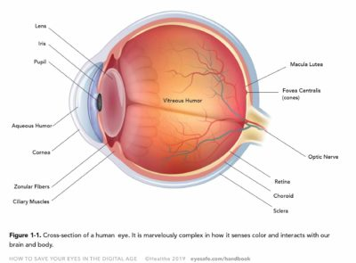 Illustration of Is It Possible To See The Nerve If The Eye Is Damaged Again?