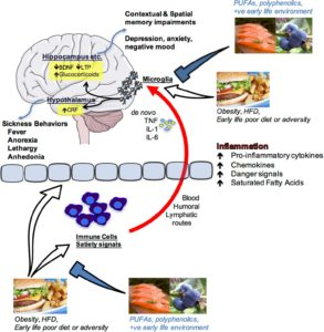 Illustration of Changes In Behavior Accompanied By Worsening Memories, And No Appetite After Recovering From A Mild Stroke?