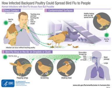 Illustration of Does The Flu Not Heal Whether The Symptoms Of Bird Flu?