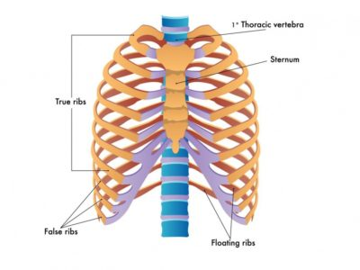 Illustration of The Lower Ribs Hurt And Don't Heal?