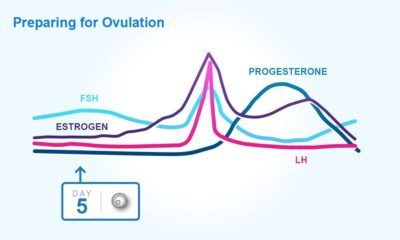Illustration of Hormones That Affect The Process Of Ovulation?