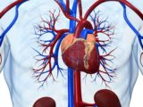 The Use Of Sodium Bicarbonate In People With Heart Disease And Kidney Failure?
