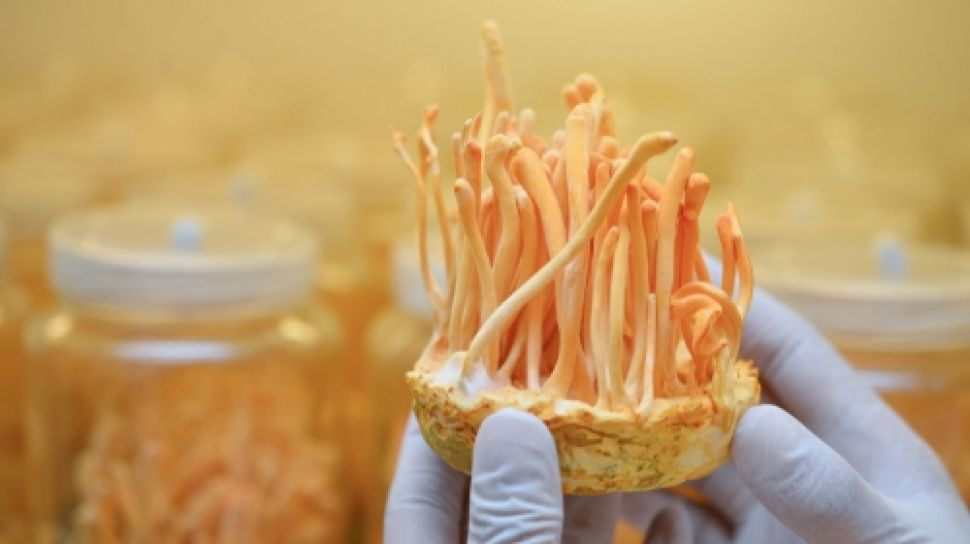 Cordyceps Fungi Claimed to Potentially Inhibit Covid-19