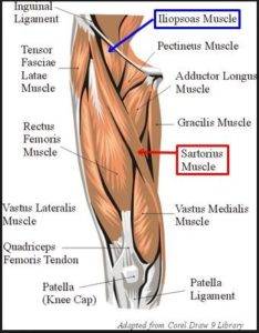 Illustration of Pain In The Groin And Below The Knee To The Calf?