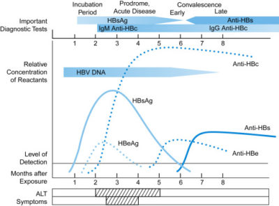 Illustration of If Anti-HBs Is Non-reactive Is It Really Not Vaccinated From The Start?
