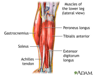 Illustration of Handling Of Tendon Muscle Pain In The Lower Legs Of The Calf?