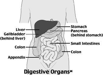 Illustration of Liquid Chapter Accompanied By Left Abdominal Pain And Feel Bloated?