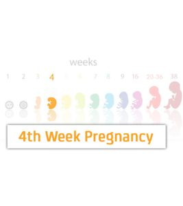 Illustration of The Content Is Weak At 4 Weeks Of Gestation?